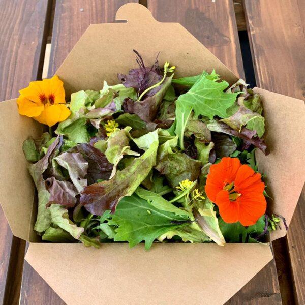 salad-box-square-800px